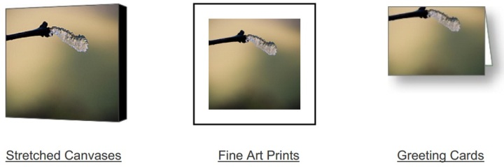 Frozen Growth on Fine Art America