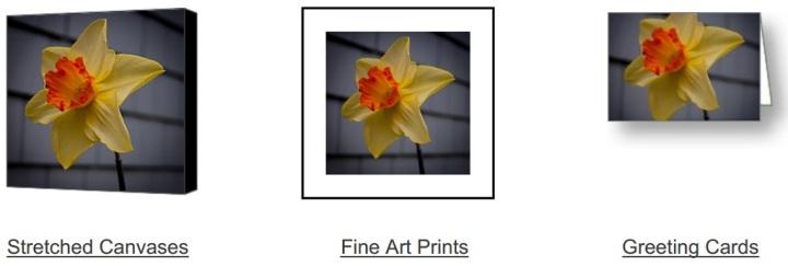 Daffodil Days Ahead on Fine Art America