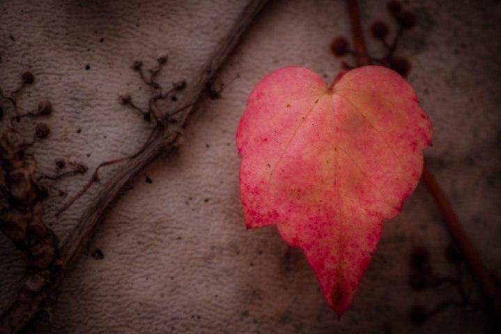 Lovely Leaf - Color Enhanced