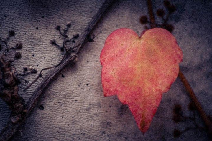 Lovely Leaf - Filtered/Artistic