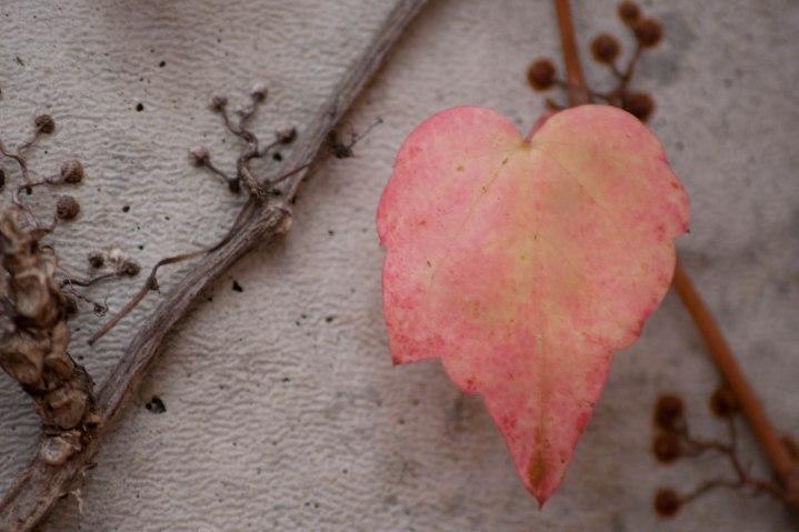 Lovely Leaf - RAW