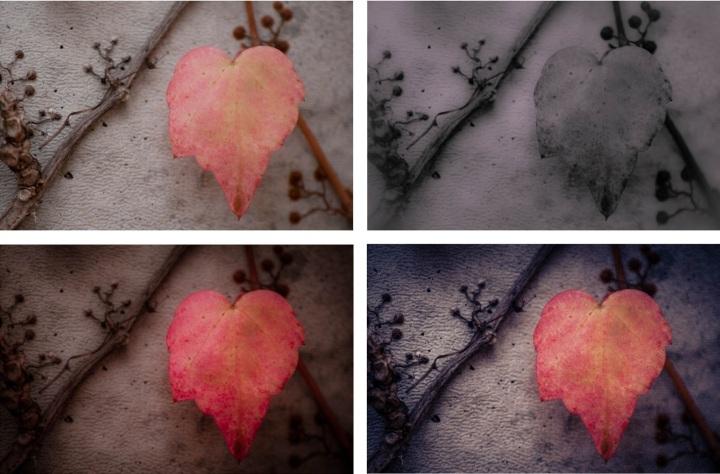 Lovely Leaf - Collage