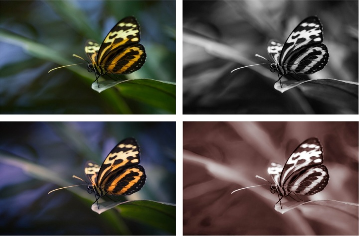 Tiger Wings - Collage