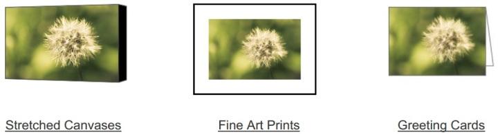 Dandelion Warmth on Fine Art America