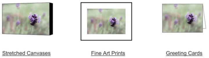 Lovely Lavender on Fine Art America