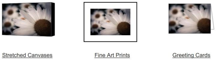 Daisy Don't Doubt on Fine Art America