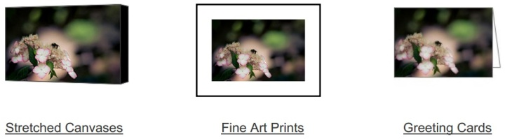 Honey Just Bee on Fine Art America