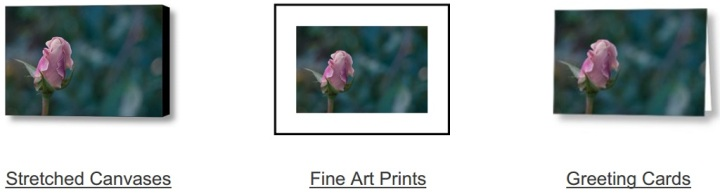 Late Bloom on Fine Art America