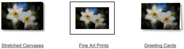 Daffodil Dreamin on Fine Art America
