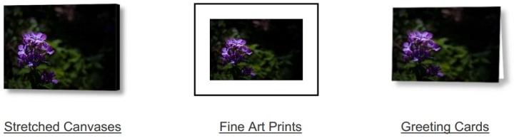 Violet Eyes on Fine Art America